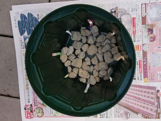 スリット鉢に鉢底石を敷き詰める
