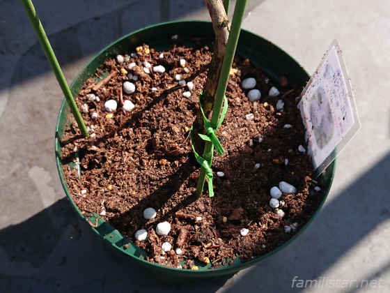IB化成肥料を四隅に3個ずつ配置