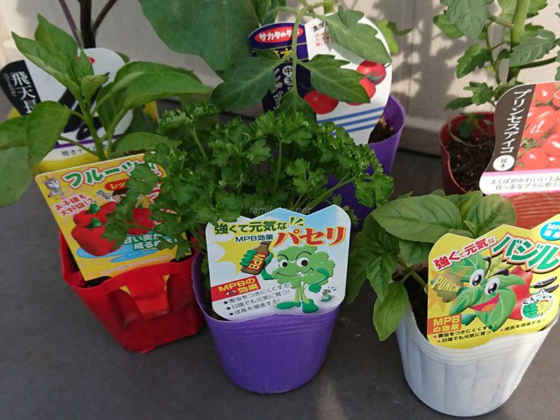 5月に植えた苗:ナス(飛天長)、中玉トマト(シンディスイート)、ミニトマト(プリンセスアイコ)、フルーツパプリカ、パセリ、バジル